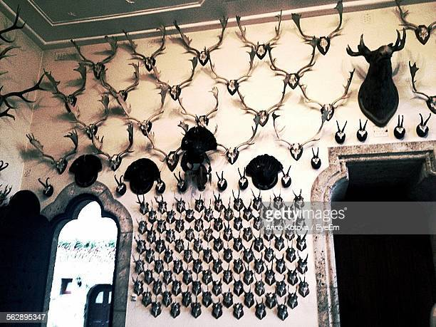 Low Angle View Of Hunting Trophies On Wall