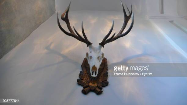 low angle view of hunting trophy on wall - emma hunter eye em stock photos and pictures