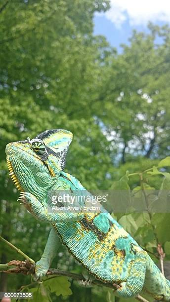 Low Angle View Of Iguana Against Trees