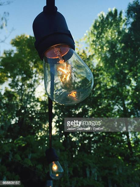 Low Angle View Of Illuminated Light Bulb Hanging Against Trees