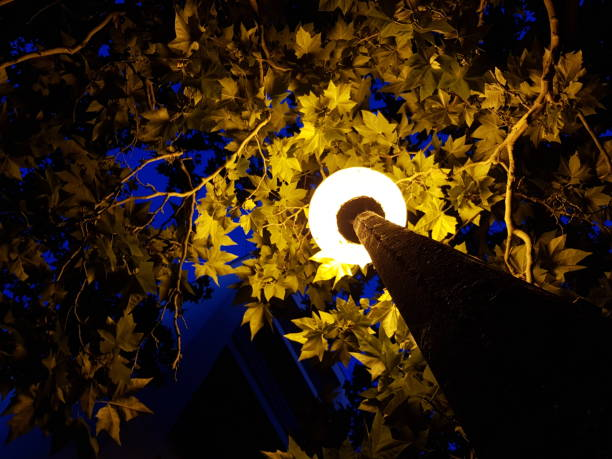 Low Angle View Of Illuminated Lighting Equipment Amidst Leaves At Night