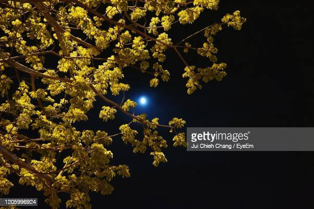 low angle view of illuminated tree against sky at night - flower moon stock pictures, royalty-free photos & images