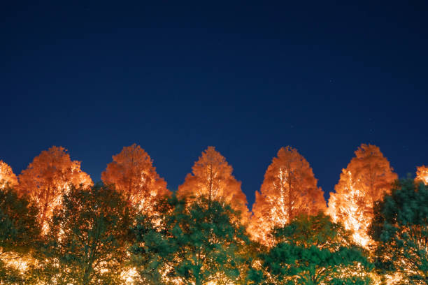 Low Angle View Of Illuminated Trees Against Clear Blue Sky