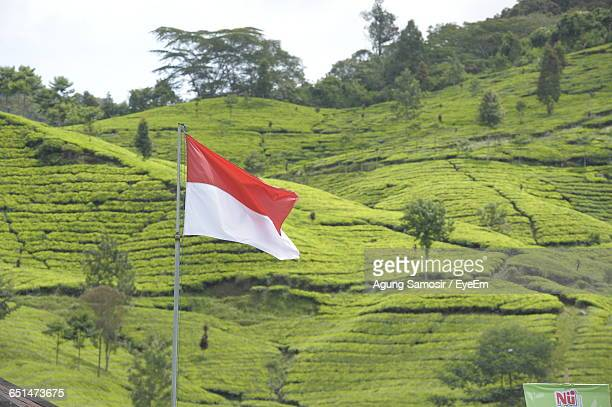 low angle view of indonesian flag against green landscape - indonesia flag stock photos and pictures