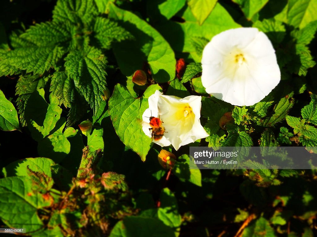 Low Angle View Of Insect On Trumpet Flower At Park : Stock Photo