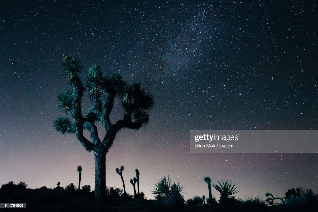 Low Angle View Of Joshua Tree Against Sky : Stock Photo