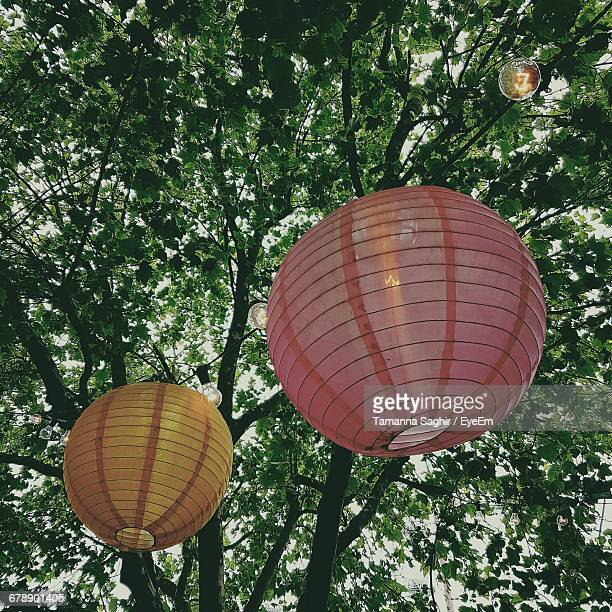 Low Angle View Of Lanterns Hanging From Tree Branches