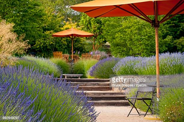 Low Angle View Of Lavender And Empty Seats In Park
