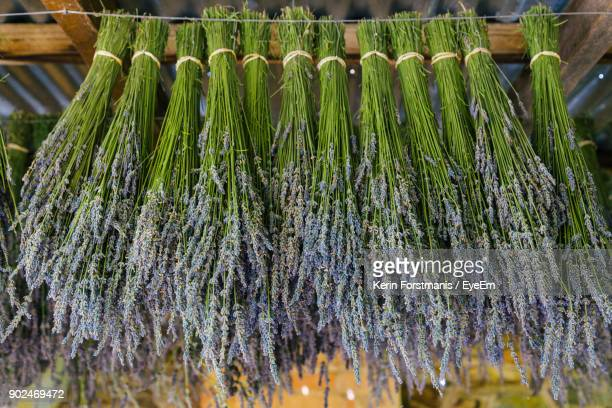 Low Angle View Of Lavender Bouquets Hanging At Market