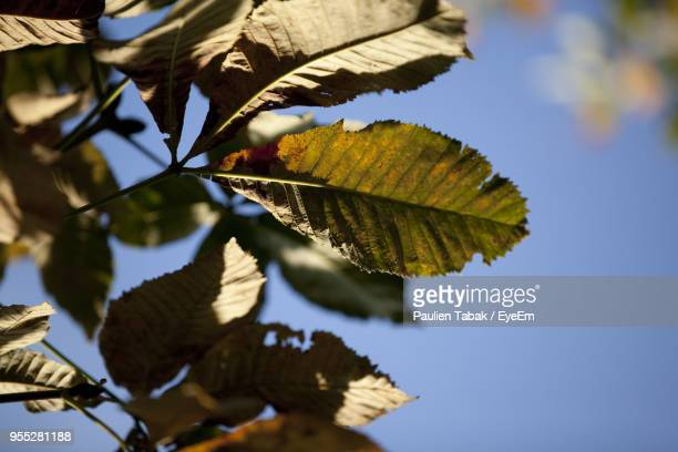 Low Angle View Of Leaves On Branch Against Sky