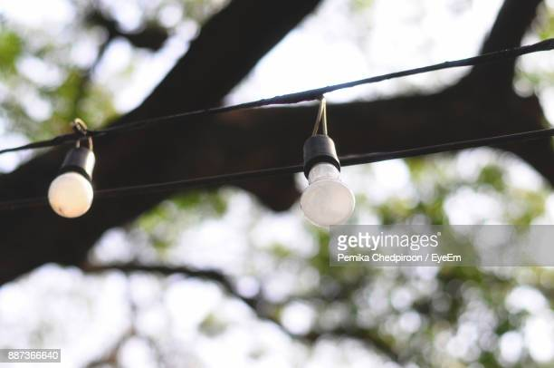 Low Angle View Of Light Bulb Hanging Against Tree