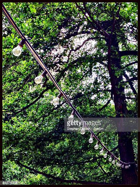 Low Angle View Of Light Bulbs Hanging Against Trees