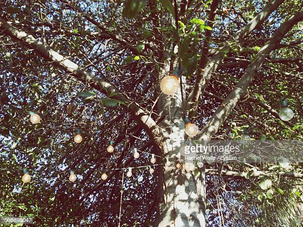 low angle view of light bulbs hanging from tree - rachel wolfe stock pictures, royalty-free photos & images