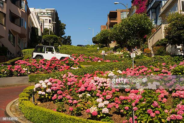 """""""low angle view of lombard street, san francisco, california, usa"""" - lombard street san francisco stock pictures, royalty-free photos & images"""