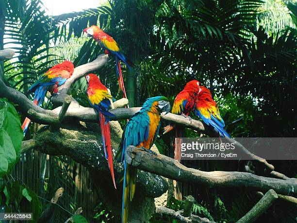 Low Angle View Of Macaws Perching On Branches