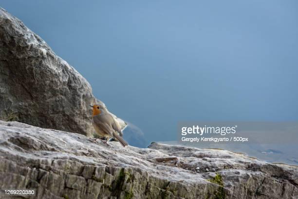 low angle view of man climbing on mountain against sky, thal, austria - thal austria stock-fotos und bilder