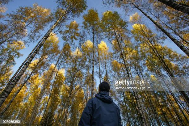 Low Angle View Of Man Looking At Trees In Forest