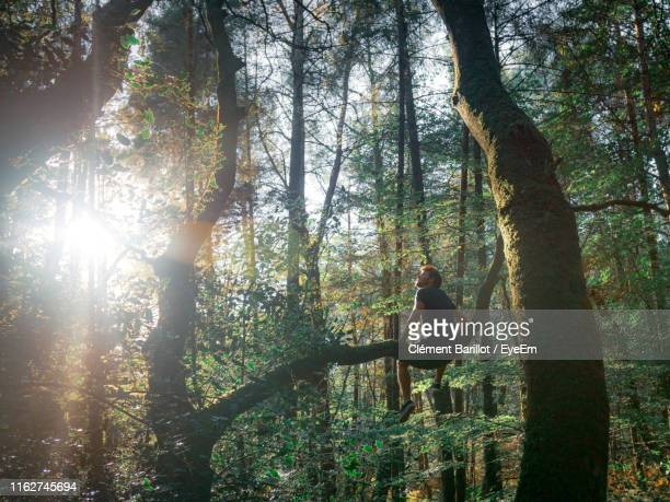 low angle view of man sitting on branch in forest - arbre photos et images de collection