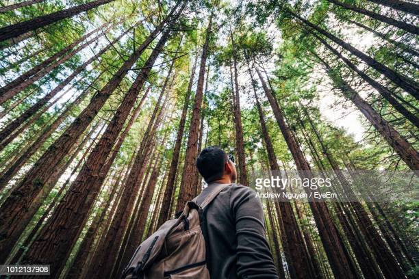 low angle view of man standing against trees in forest - tall high stock photos and pictures