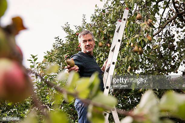 Low angle view of man standing on ladder offering pear in orchard