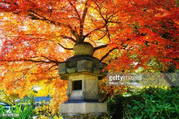 Low Angle View Of Maple Tree In Park During Autumn