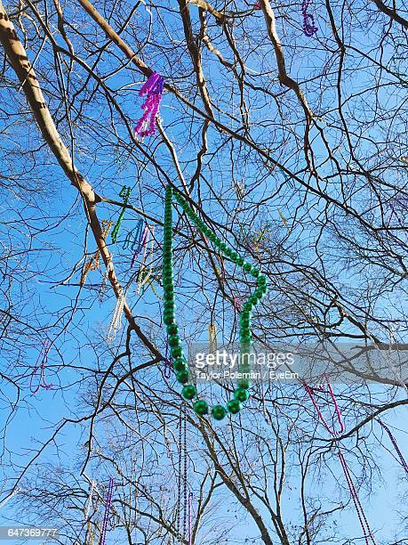 low angle view of mardi gras beads hanging on bare trees - mardi gras beads stock photos and pictures