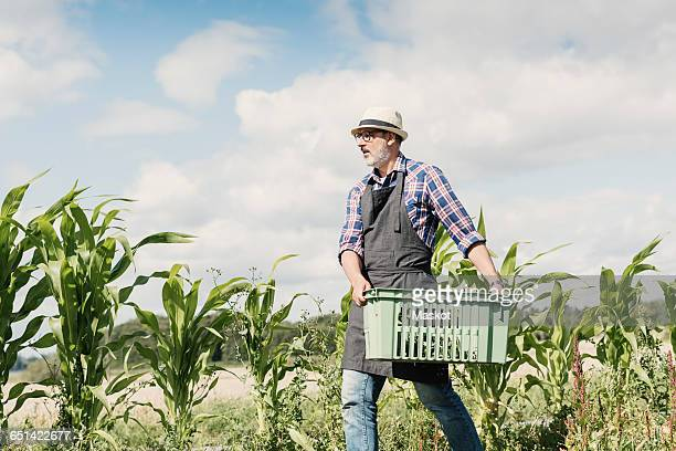 Low angle view of mature gardener carrying crate at farm against sky