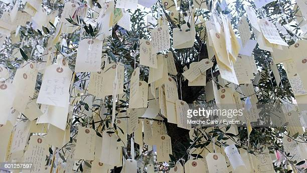 Low Angle View Of Messages Hanging On Wish Tree