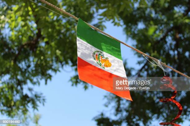 low angle view of mexican flag against tree - bandera mexicana fotografías e imágenes de stock