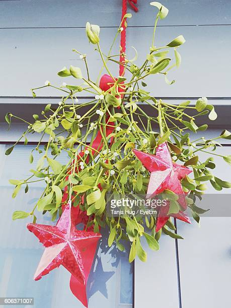 low angle view of mistletoe hanging against window - what color are the berries of the mistletoe plant stock pictures, royalty-free photos & images