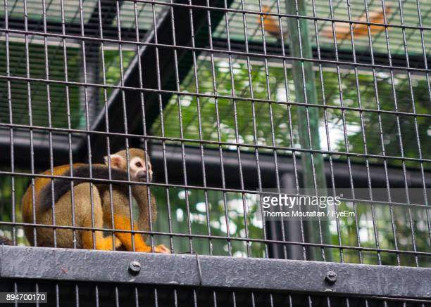 Low Angle View Of Monkey In Cage