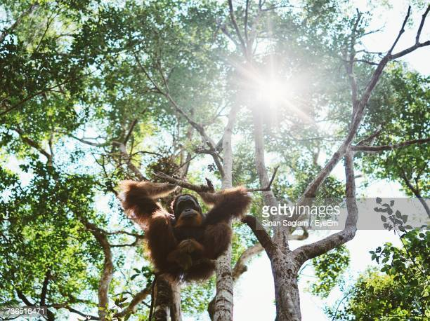 Low Angle View Of Monkey On Tree Against Sky