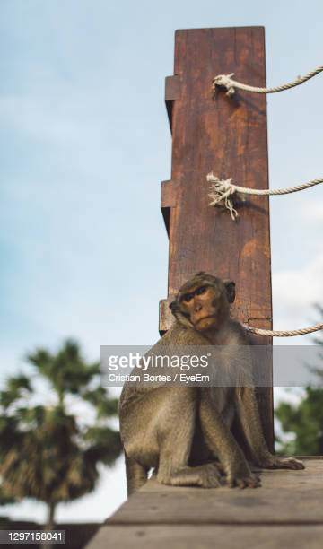 low angle view of monkey sitting against the sky - bortes foto e immagini stock