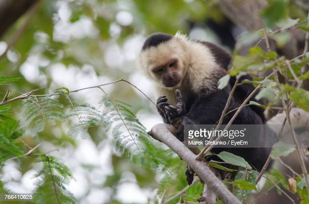 low angle view of monkey sitting on tree - marek stefunko stock photos and pictures