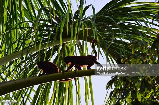 Low Angle View Of Monkeys Perching On Branch