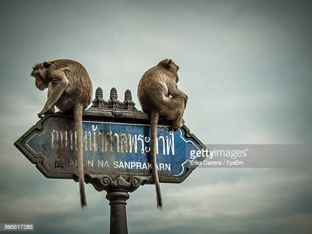 low angle view of monkeys sitting on sign board against cloudy sky - asia carrera imagens e fotografias de stock