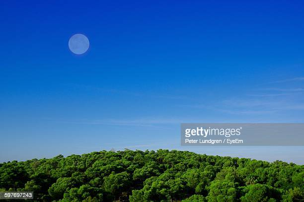 Low Angle View Of Moon Over Trees Against Sky