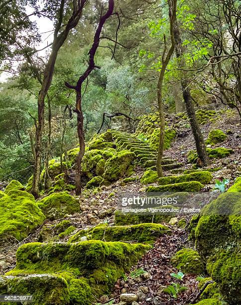 low angle view of moss covered steps in forest - vgenopoulos stock pictures, royalty-free photos & images