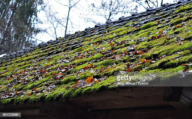 Low Angle View Of Moss Growing Of Roof