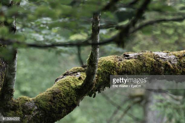 Low Angle View Of Moss On Tree Branch