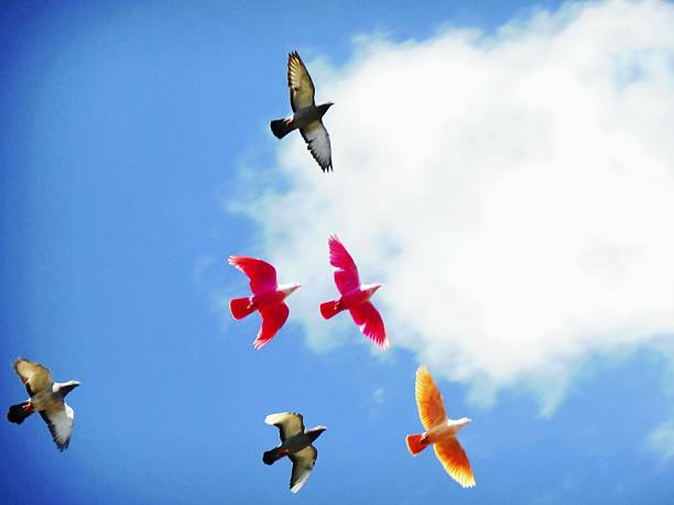 Low Angle View Of Multicolored Birds Flying Against Cloudy Sky