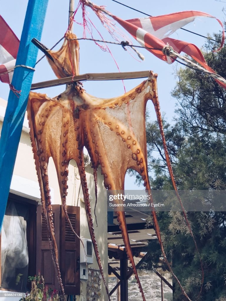 Low Angle View Of Octopus Hanging From Cable High-Res ...
