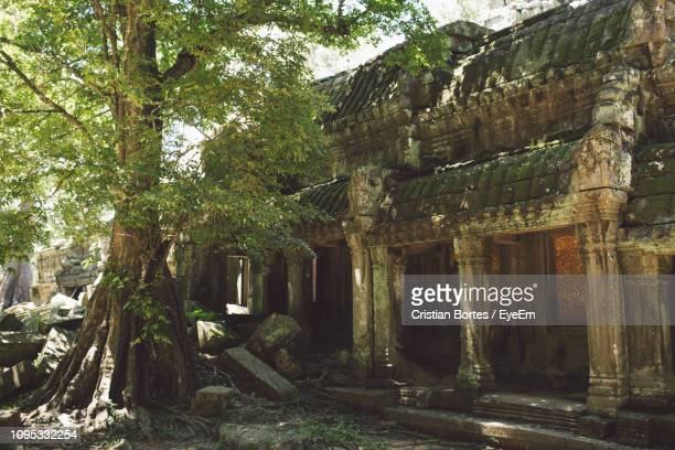low angle view of old temple against tree - bortes stock-fotos und bilder