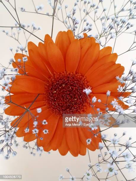 Low Angle View Of Orange Flowering Plant