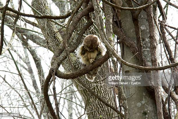 Low Angle View Of Owl Perching On Bare Tree
