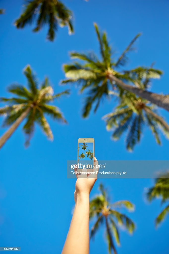 Low angle view of Pacific Islander woman taking cell phone photograph of palm trees : Foto stock