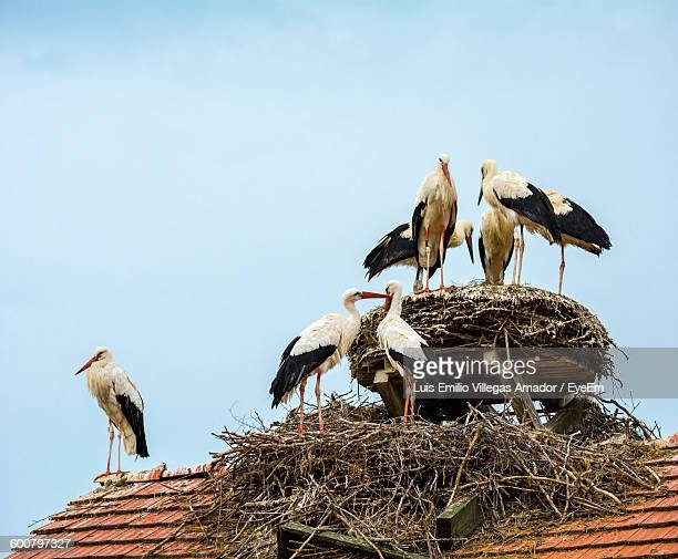 Low Angle View Of Painted Storks On Nest Against Sky