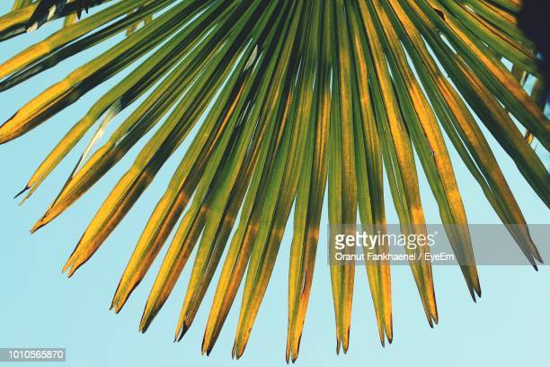 low angle view of palm leaves against sky - date palm tree stock pictures, royalty-free photos & images