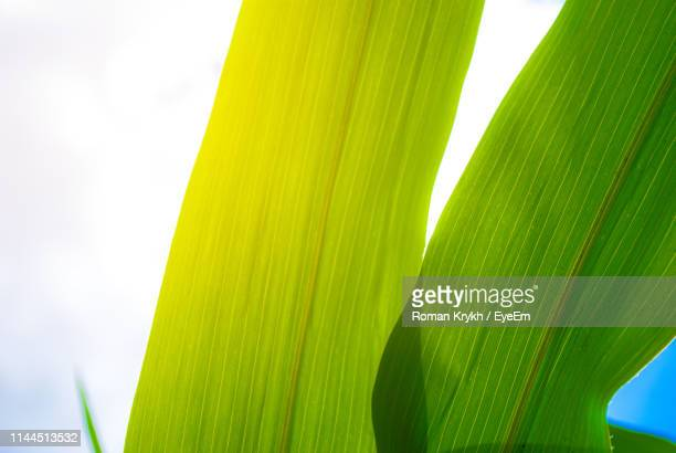 low angle view of palm leaves against sky - blade of grass stock pictures, royalty-free photos & images