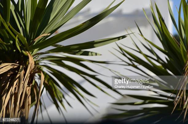 low angle view of palm leaves - charley green stock pictures, royalty-free photos & images